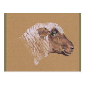Cartão Postal Os carneiros Surly