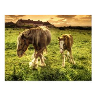 Cartão Postal Os cavalos serem de mãe e Foal