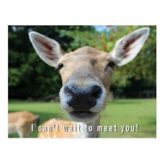 Cartão Postal Os cervos Nosy não podem esperar para encontrá-lo