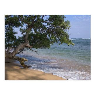 Cartão Postal Os EUA, Havaí, Kauai, encalham cénico. RF)