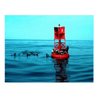 Cartão Postal Os leões de mar no porto buoy, Ventura,