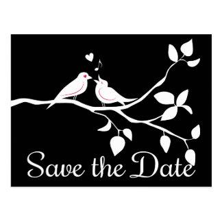 Cartão Postal Os Lovebirds preto e branco salvar o casamento da