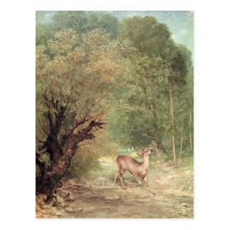 Cartão Postal Os Ovas-Cervos caçados no alerta, primavera, 1867