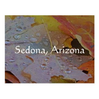 Cartão Postal os pingos de chuva mantêm-se cair em minha folha