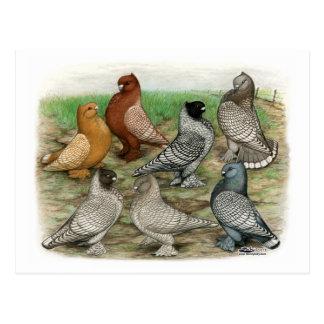 Cartão Postal Os pombos clássicos do folho ataram Blondinettes
