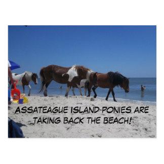 Cartão Postal Os pôneis da ilha de Assateague retiram a praia