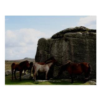 Cartão Postal Os pôneis de Dartmoor que protegem o monte do osso