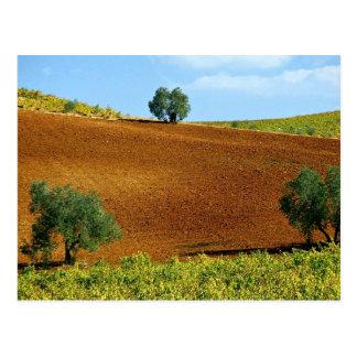 Cartão Postal Os vinhedos aproximam Montilla, a Andaluzia,