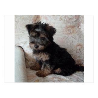 Cartão Postal Oscar o filhote de cachorro do yorkshire terrier