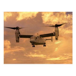 Cartão Postal Osprey