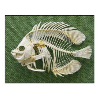 Cartão Postal Osso de peixes/osso do desejo