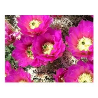 Cartão Postal Ouriço CactusGlobe, arizona