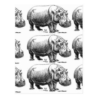 Cartão Postal ouro do hippopotamus