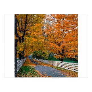 Cartão Postal Outono Backroad cénico New Hampshire