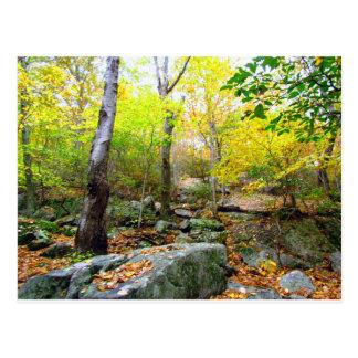 Cartão Postal Outono em Connecticut