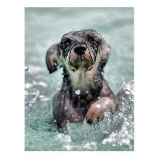 Cartão Postal Pá do Doggy