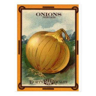 Cartão Postal pacote da semente da cebola
