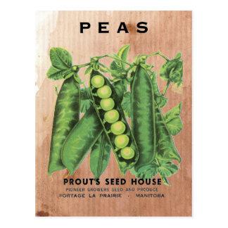 Cartão Postal Pacote da semente de ervilhas