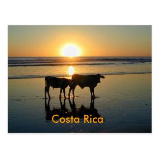 Cartão Postal País da vaca de Bejuco do cartão, Costa Rica