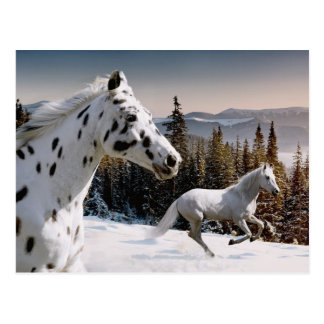 Cartão Postal País das maravilhas do inverno