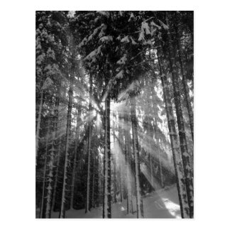 Cartão Postal País das maravilhas preto e branco do inverno