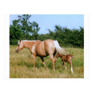 Cartão Postal País do cavalo