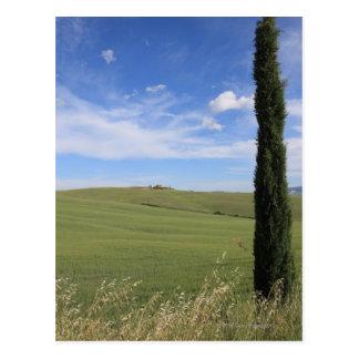 Cartão Postal Paisagem com Cypress