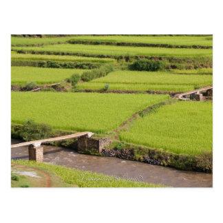 Cartão Postal Paisagem de arrozals à Madagáscar