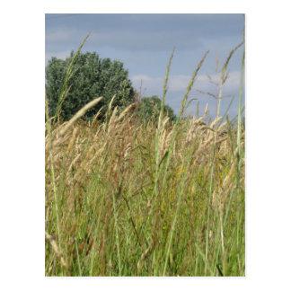 Cartão Postal Paisagem do verão do campo selvagem no campo