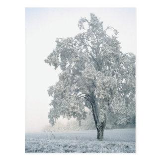 Cartão Postal Paisagem nevado do inverno
