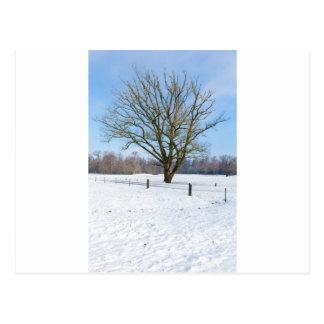 Cartão Postal Paisagem nevado do inverno com árvore desencapada