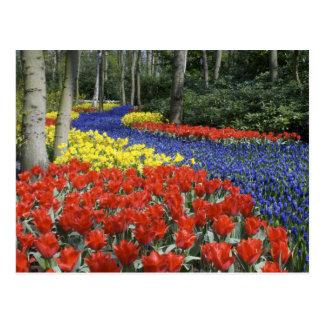 Cartão Postal Países Baixos, Holland, Lisse, jardins de