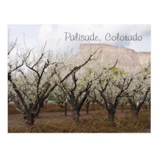 Cartão Postal Palisade, Colorado
