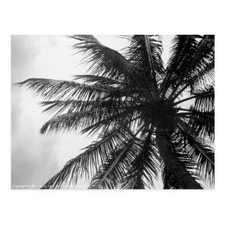 Cartão Postal Palma de coco