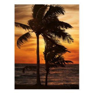 Cartão Postal palmas da silhueta do paraíso