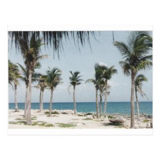 Cartão Postal Palmas de Cancun