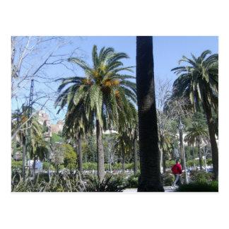 Cartão Postal Palmas em Malaga