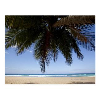 Cartão Postal Palmeira ao longo do mar das caraíbas
