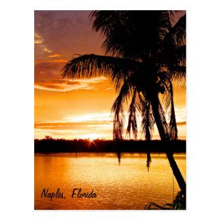 Cartão Postal Palmeira da silhueta do cartão, céu alaranjado do