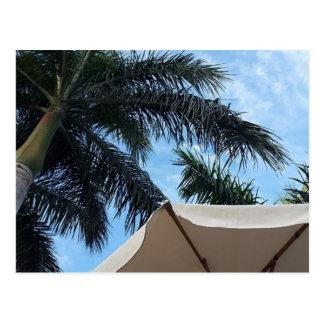 Cartão Postal Palmeira de Tenerife