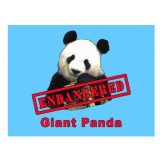 Cartão Postal Panda gigante PSTA EM PERIGO
