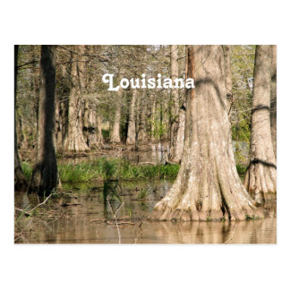 Cartão Postal Pântano de Louisiana