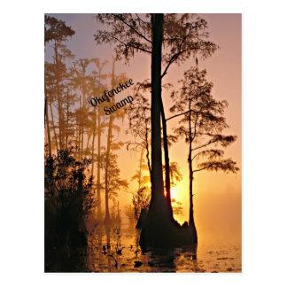 Cartão Postal Pântano de Okefenokee