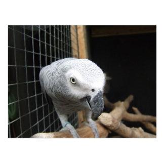Cartão Postal Papagaio
