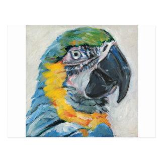 Cartão Postal Papagaio azul