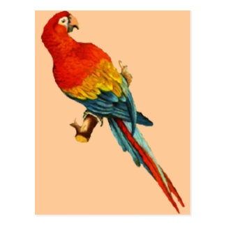 Cartão Postal Papagaio Desing de Macaw* do *Scarlet do vintage