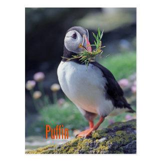 Cartão Postal Papagaio-do-mar engraçado