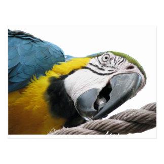 Cartão Postal Papagaio na corda