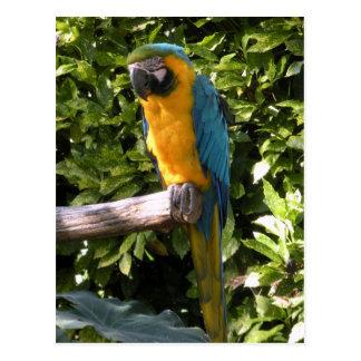 Cartão Postal Papagaio no jardim zoológico de Birmingham