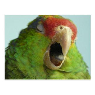 Cartão Postal papagaio que boceja